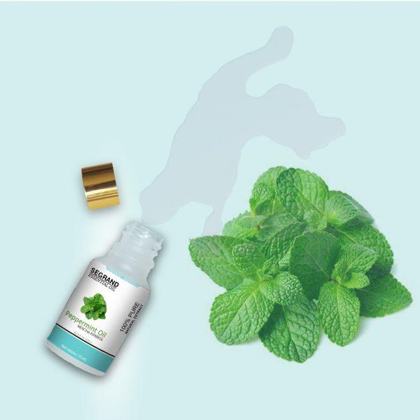 Peppermint Oil